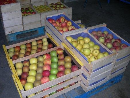 fruits - pommes - colorées - lafermedelaclavette
